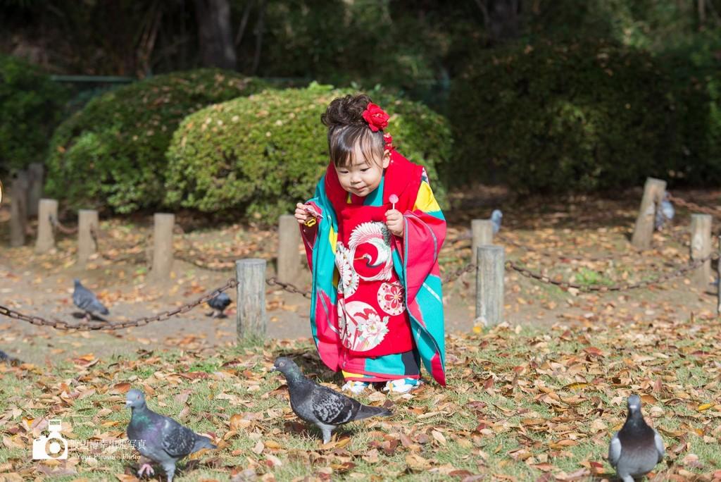 鳩を追いかける着物姿の女の子