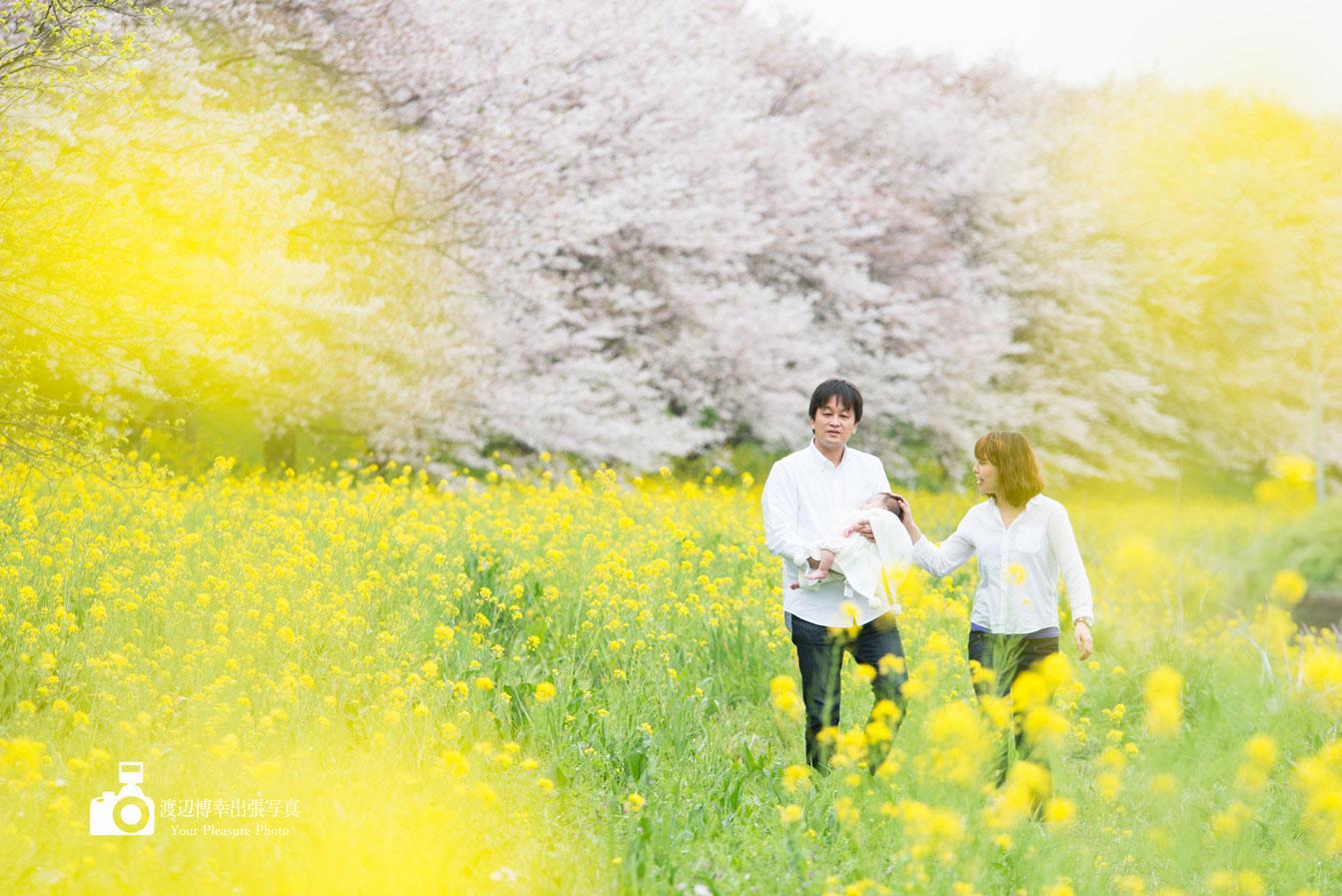 Spring-Dream