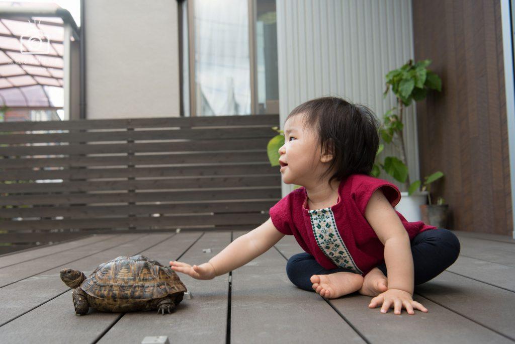 小さな女の子が亀を触っている