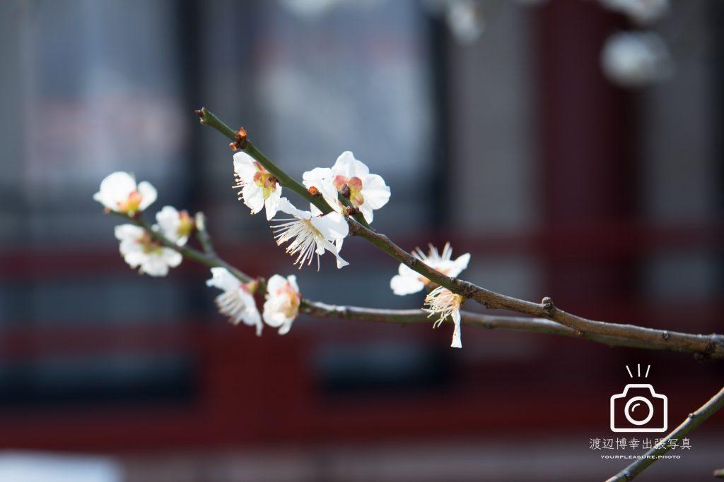 春のあしおと。