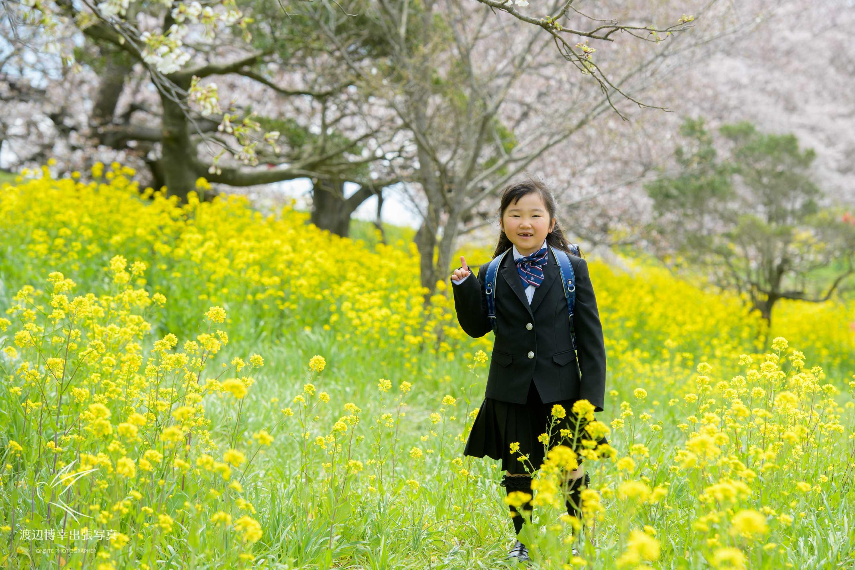 一面の菜の花の中に立つランドセルを背負った小学1年生の女の子