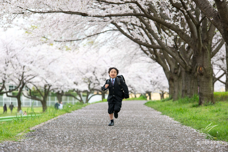 桜並木の下を走ってくる小学1年生