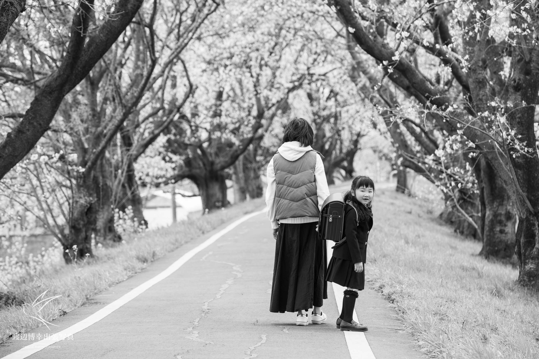 桜並木の下で歩く女性と小学一年生の女の子
