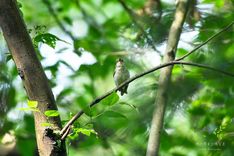 森の中の枝に止まる野鳥