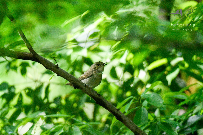 森のなかの枝に止まる野鳥