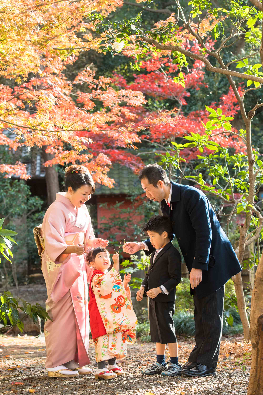 松葉で遊ぶ七五三の着物姿の女の子とお兄ちゃんパパとママ