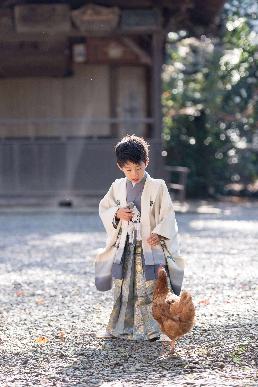 立っている七五三の着物姿の男の子とそばに寄るニワトリ