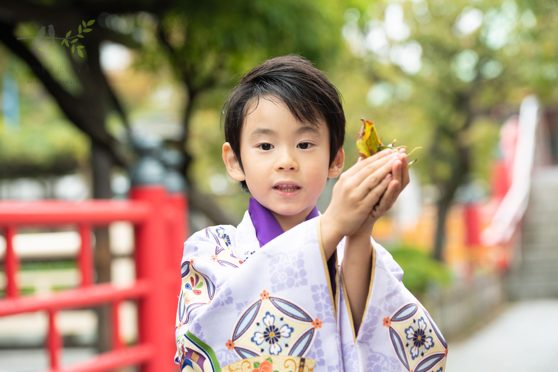 葉っぱを手に持つ紫色の着物姿の七五三の男の子